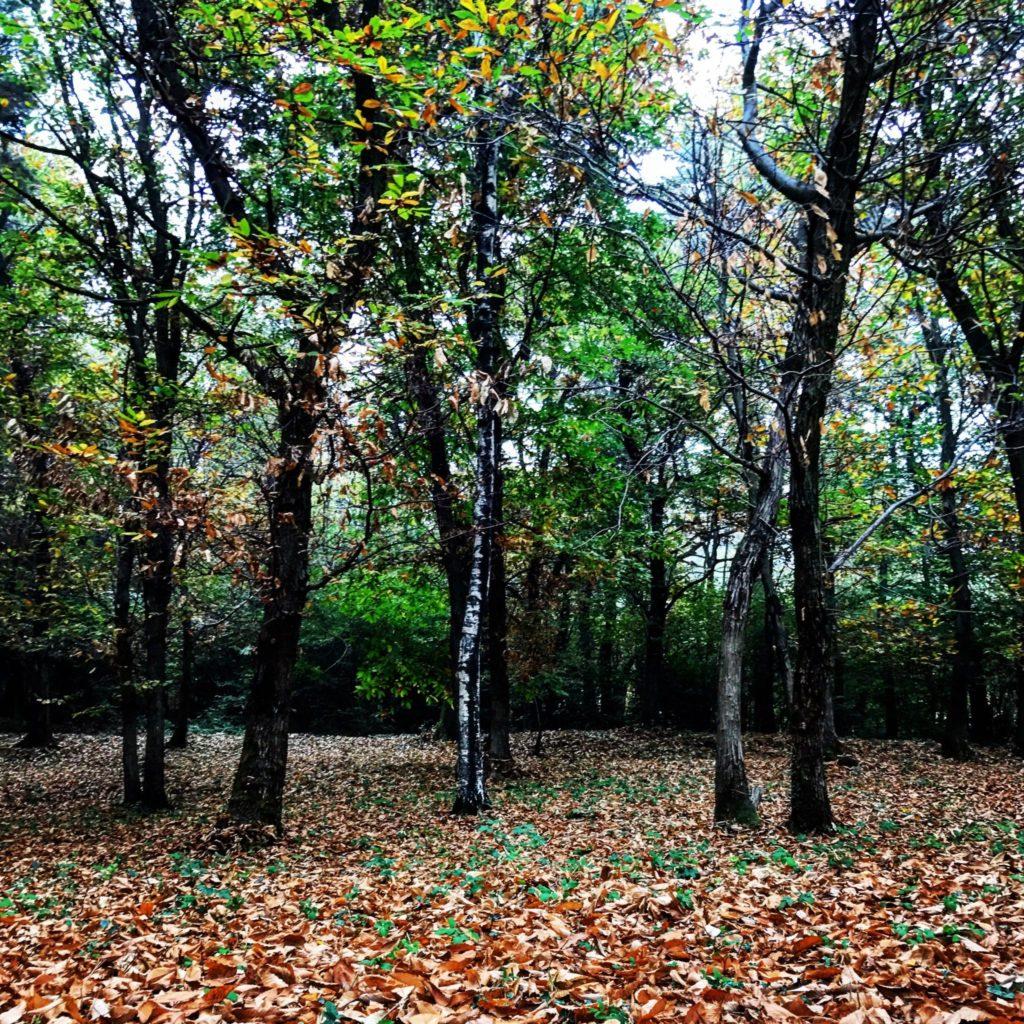 nel bosco a raccogliere castagne